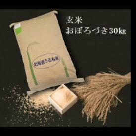 【令和2年度産】【ふるさと納税】 2411 玄米おぼろづき30kg×1袋