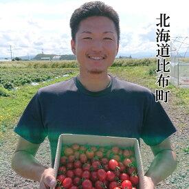 【ふるさと納税】Farm of soul(畠山農園)高糖度フルーツトマト【ジェルバ】1.2kg 2021年産予約開始!