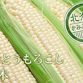【ふるさと納税】朝採り【白いとうもろこし】L-LL 12本セット≪北海道上富良野町産≫ 【野菜・とうもろこし・トウモロコシ・セット・詰合せ】 お届け:2020年8月中旬〜下旬まで