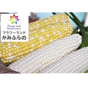 【ふるさと納税】かみふらの産スイートコーンLL黄色・白色各6本セット(計12本) 【野菜・とうもろこし】 お届け:2020年8月中旬〜9月中旬