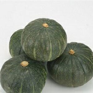 【ふるさと納税】かぼちゃ(粉質系)5〜6玉 10kg