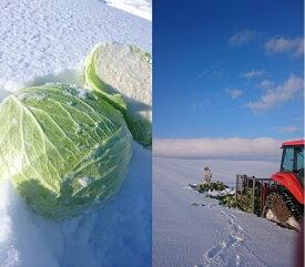 【ふるさと納税季節限定商品】さとうさんちの越冬キャベツ