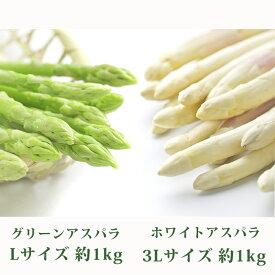 【ふるさと納税】北海道 美深町産 ホワイトアスパラ3L約1.0kg・グリーンアスパラL約1.0kgセット 【野菜】 お届け:2020年5月中旬〜2020年6月上旬