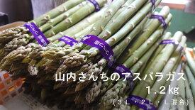 【ふるさと納税】山内さんちのアスパラガス 1.2kg (3L・2L・L混合 )