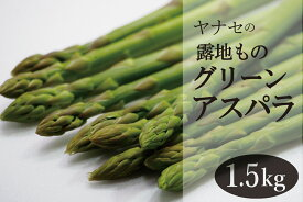 【ふるさと納税】柳瀬産商 グリーンアスパラ 1.5kg