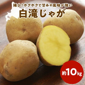 【ふるさと納税】北海道産 しらたきじゃがいも 約10kg 《レシピ本付き》