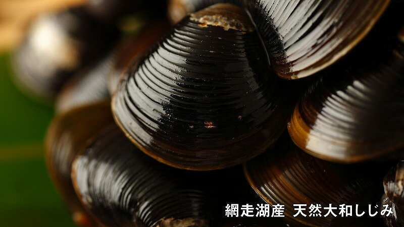 【ふるさと納税】網走湖産天然大和しじみ1.5kg(特大)