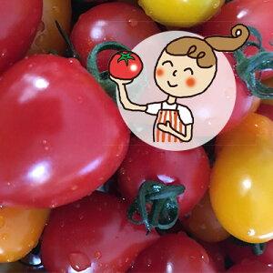 【ふるさと納税】<2020年6月下旬よりお届け>北海道壮瞥産 彩りミニトマト約3kg 【野菜・ミニトマト】 お届け:2020年6月下旬〜7月末頃まで