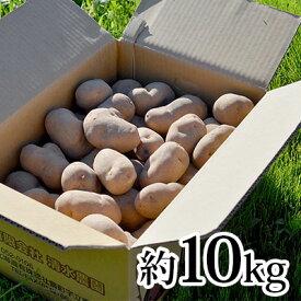 【ふるさと納税】<2021年9月初旬よりお届け>北海道壮瞥産 幻のじゃがいも インカのめざめ約10kg 【野菜・じゃがいも・インカのめざめ・芋・ジャガイモ】 お届け:2021年9月初旬〜10月末頃まで