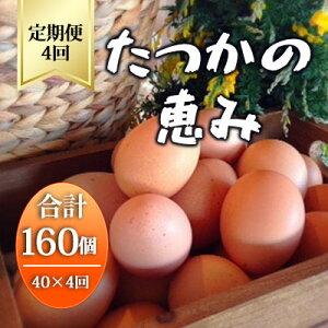 【ふるさと納税】平飼い有精卵『たつかの恵み』40個×4ヶ月連続お届け  【定期便・卵】