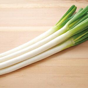 【ふるさと納税】役に立ちます 冷凍カット野菜 長ねぎ1/2分×20袋 【野菜・ねぎ】