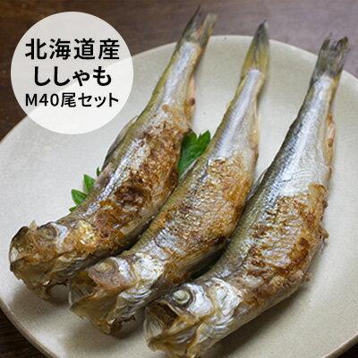 【ふるさと納税】北海道産ししゃも M40尾セット 【魚貝類/ししゃも】