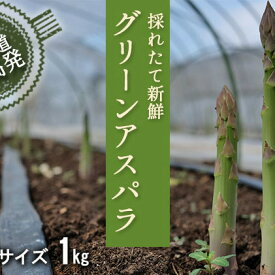 【ふるさと納税】2L【秀品】約1kgグリーンアスパラ<北海道日高門別産> 【野菜】 お届け:2021年4月上旬〜6月上旬まで