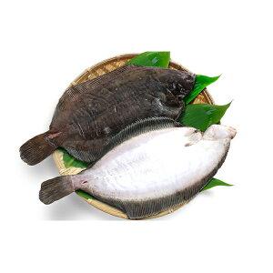 【ふるさと納税】ひだか産 なめたカレイ約1.4kg 【魚貝類・干物・魚介類・カレイ】