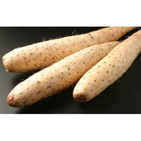 【ふるさと納税】北海道十勝幕別産 長いもAL 約5kg 【野菜・長いも】