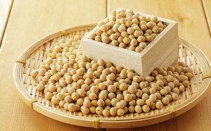 【ふるさと納税】北海道十勝 本別町産 白目大豆10kg