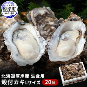 【ふるさと納税】北海道厚岸産 殻付カキ(生食用Lサイズ20個) 【魚貝類・生牡蠣・かき】