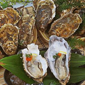 【ふるさと納税】厚岸産殻付牡蠣マルえもんL&マルえもんLLセット 【魚貝類・生牡蠣・かき】