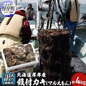 【ふるさと納税】【訳あり・規格外】 北海道厚岸産 殻付カキ(マルえもん)約4kg 1箱目安(25個〜50個) カキナイフ付き 【魚貝類・魚介類・生牡蠣・牡蠣・かき・カキ・シーフード・殻付き