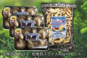 【ふるさと納税】143.摩周産 菌床生しいたけ・乾燥しいたけセット(生200g×3パック、乾燥40g×1袋) 椎茸 5000円