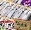 今なら「鮭とばイチロー100g」プレゼント【ふるさと納税】しらぬか産ししゃも【オスメス70尾】