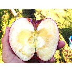 【ふるさと納税】りんご「完熟おいらせ」3kg(冷蔵)_A19【1073683】