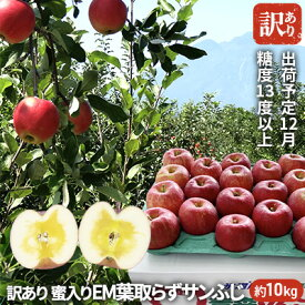 【ふるさと納税】12月 訳あり 蜜入り EM葉取らずサンふじ約10kg 糖度13度以上【弘前市産・青森りんご】 【果物類・林檎・りんご・リンゴ・サンふじ】 お届け:2020年12月1日〜2020年12月28日