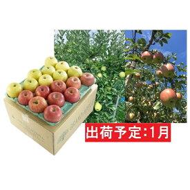 【ふるさと納税】1月 訳あり 葉とらずサンふじ+王林ミックス約10kg【弘前市産・青森りんご】 【果物類・林檎・りんご・リンゴ・サンふじ・王林】 お届け:2021年1月5日〜2021年1月31日
