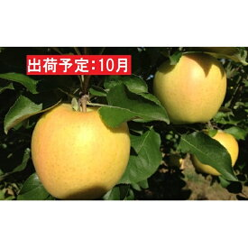 【ふるさと納税】10月 美味・芳香 訳あり トキ約10kg【弘前市産・青森りんご・グランド アップル】 【果物類・林檎・りんご・リンゴ】 お届け:2021年10月1日〜2021年10月31日