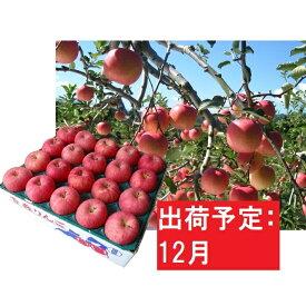 【ふるさと納税】りんご 青森産 約5kg 丸福 サンふじ 光センサー 選果 糖度 12度以上【12月発送】 【果物類・林檎・りんご・リンゴ】 お届け:2020年12月1日〜2020年12月28日