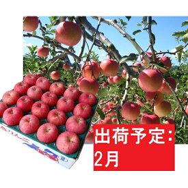 【ふるさと納税】りんご 青森産 約5kg 丸福 サンふじ 光センサー選果 糖度 12度以上【2月発送】 【果物類・林檎・りんご・リンゴ】 お届け:2021年2月1日〜2021年2月28日