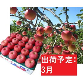 【ふるさと納税】りんご 青森産 約5kg 丸福 サンふじ 光センサー 選果 糖度 12度以上【3月発送】 【果物類・林檎・りんご・リンゴ】 お届け:2021年3月1日〜2021年3月20日