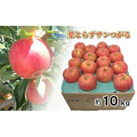 【ふるさと納税】9月 りんご 10kg程度 葉とらず サンつがる 【青森りんご・クール便】 【果物類・林檎・りんご・リンゴ・約10kg・サンつがる・つがる】 お届け:2021年9月1日〜2021年9月30日