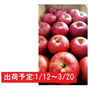 【ふるさと納税】年明け 山の完熟サンふじ約5kg  津軽広船産 【果物類・林檎・りんご・リンゴ】 お届け:2020年1月12日〜2020年3月20日