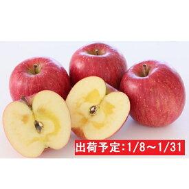 【ふるさと納税】年明け 蜜入り糖度14度以上サンふじ約3kg 青森県平川市産 【果物類・林檎・りんご・リンゴ】 お届け:2020年1月8日〜2020年1月31日