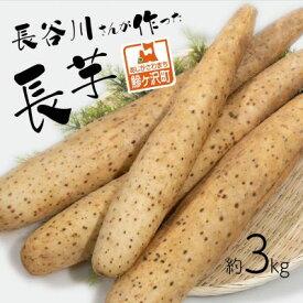 【ふるさと納税】長谷川さんが作った長芋(約3kg) 【野菜・根菜】 お届け:毎年10月上旬〜翌年4月下旬お届けです。
