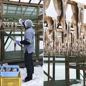 【ふるさと納税】青森県鰺ヶ沢町無添加・熟成酵母の力が活きた昭和の塩辛セット※お申込みから3〜6ヶ月以内の発送になります