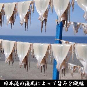 【ふるさと納税】青森県鯵ヶ沢町生干しイカ5枚セット
