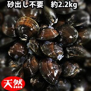 【ふるさと納税】青森県十三湖産砂出し不要天然大和しじみ(約2.2kg)