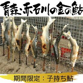【ふるさと納税】青森・赤石川の金の鮎(期間限定:子持ち鮎)