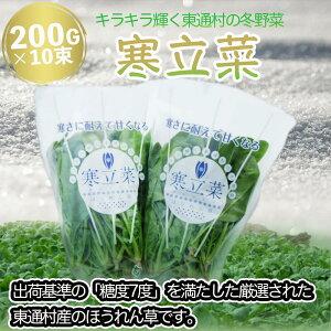 【ふるさと納税】寒立菜(期間限定)200g×10束