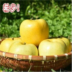 【ふるさと納税】希少!りんご【2020年産・先行受付】「もりのかがやき」 12〜16玉(約5kg)