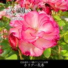 【ふるさと納税】花巻温泉バラ園オリジナル品種「ホリデー花巻」バラ苗新着