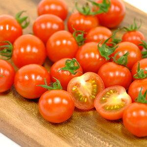 【ふるさと納税】ほんとうにおいしい「生きている野菜」トマトセット