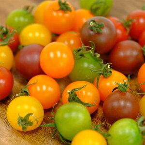【ふるさと納税】ほんとうにおいしい「生きている野菜」ミニトマト一ヶ月定期配達セット2
