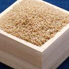 【ふるさと納税】こだわり農家の蔵出し玄米ひとめぼれ10kgAクラス1等米