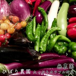 【ふるさと納税】ひばり農園の無農薬カラフル野菜《予約受付中》※6月〜11月に順次発送予定