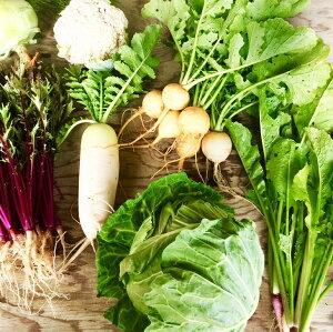 【ふるさと納税】ひばり農園たっぷり無農薬カラフル野菜《予約受付中》※6月より順次発送予定