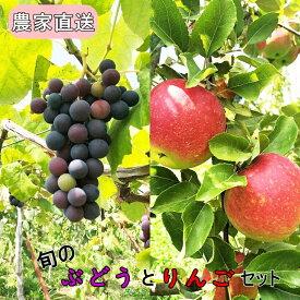 【ふるさと納税】秋の味覚満喫セット《旬のりんごとぶどうセット》数量限定・予約受付