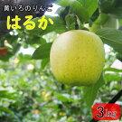 【ふるさと納税】岩手生まれの黄いろのりんご花巻産「はるか」お試し3kg(8〜12玉)【予約受付】